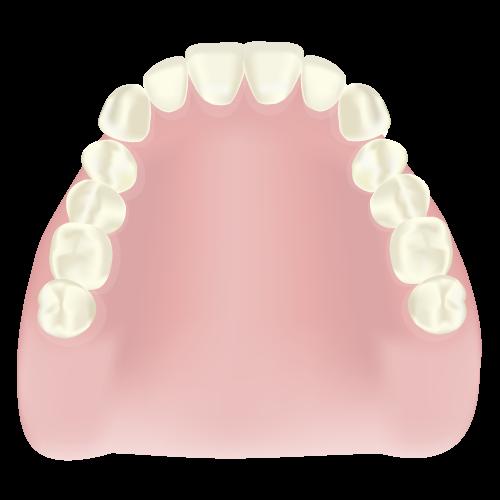 岡山県岡山市北区の歯医者 たんじフレンド歯科 義歯・入れ歯 レジン床義歯