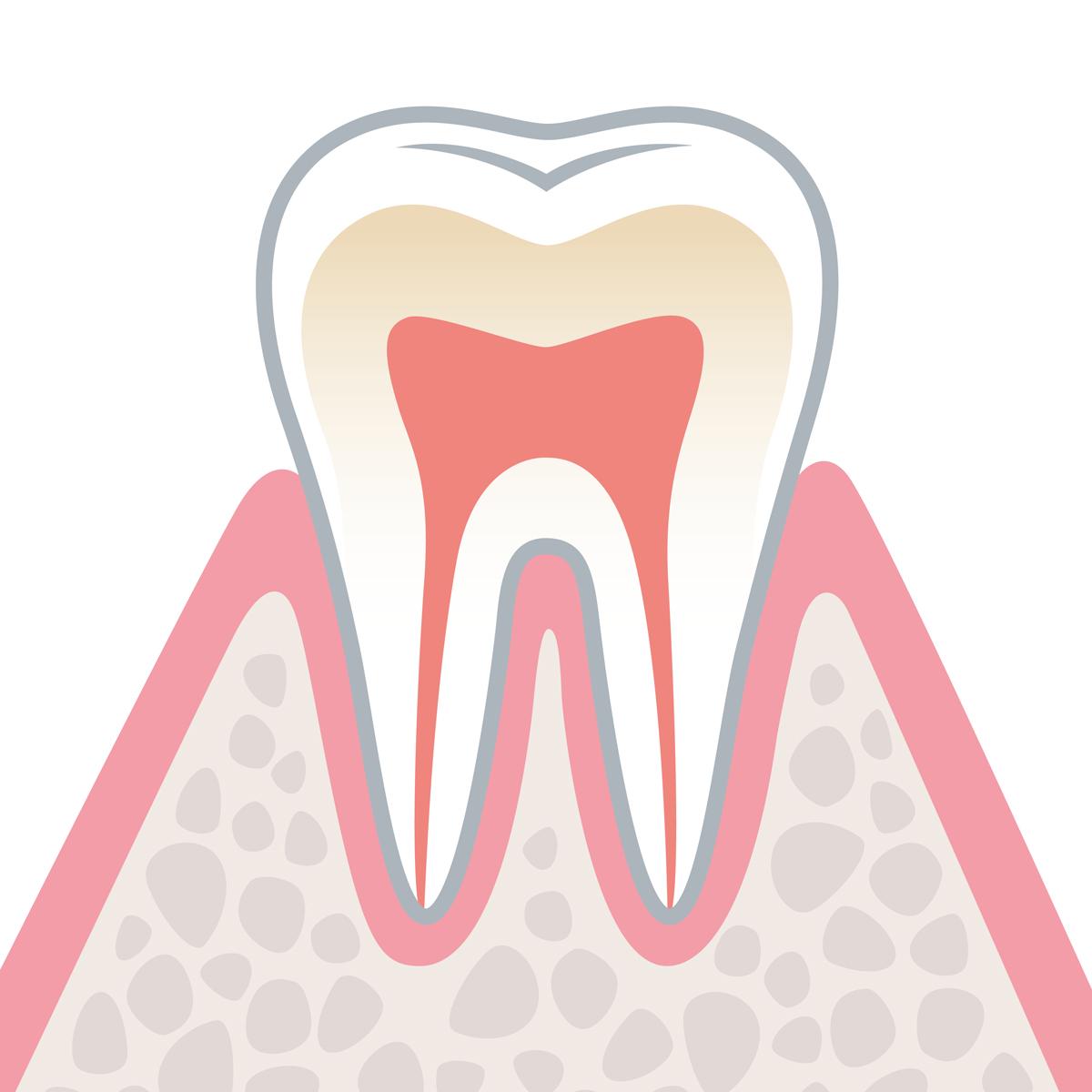 岡山県岡山市北区の歯医者 たんじフレンド歯科 歯周病 健康な状態